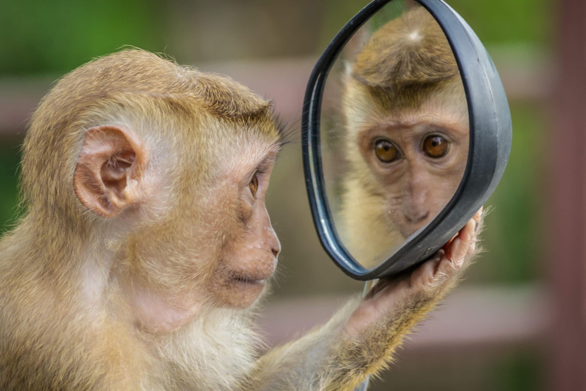 Patrick van Veen houdt een spiegel voor. Wat we van apen die vlooien kunnen leren.