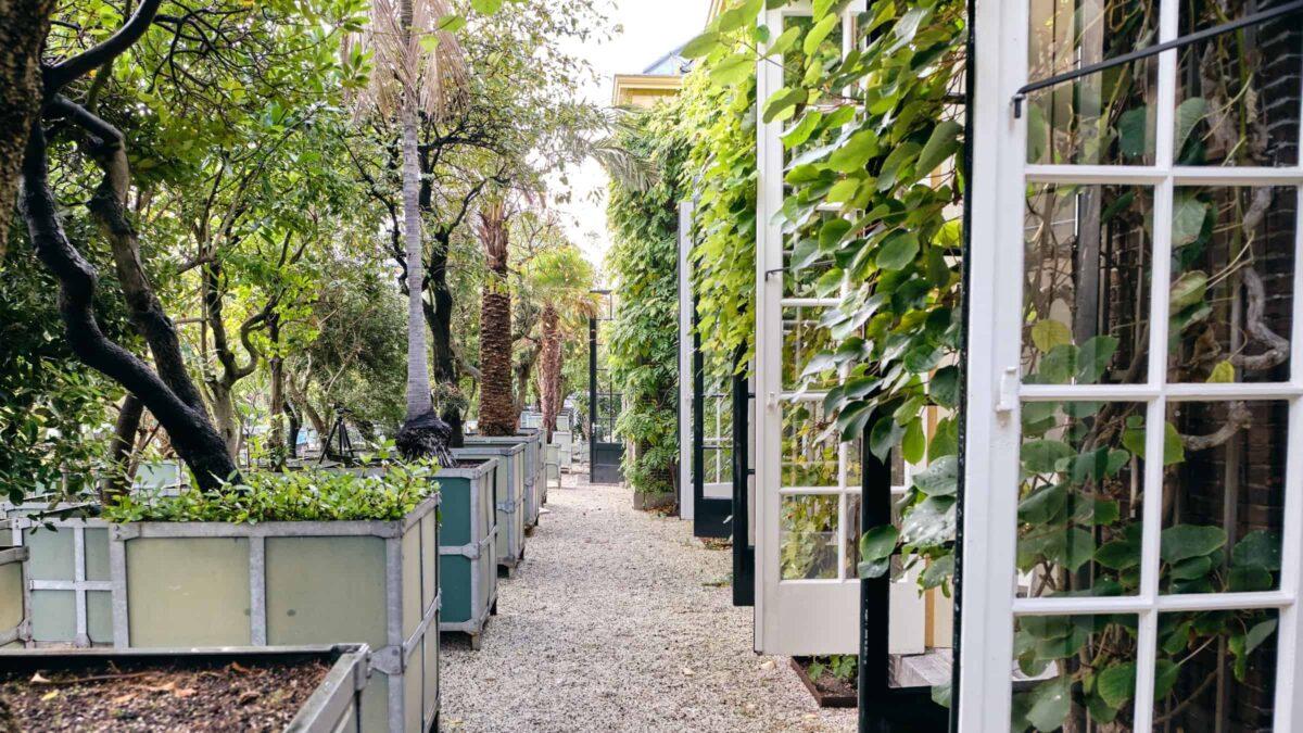 Hortus botanicus Leiden - Grote bomen in de tuin bij openslaande deuren
