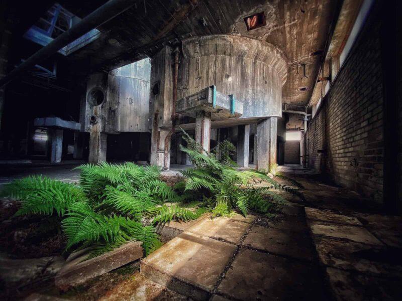 Varens die groeien in een verlaten fabriek
