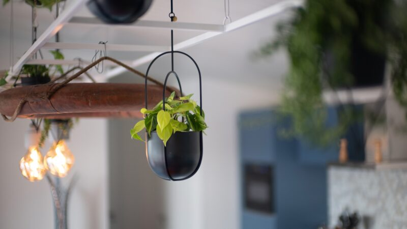 Nieuw duurzaam Qurios park is geschikt voor kleine teammeetings - plant aan plafond - roompot