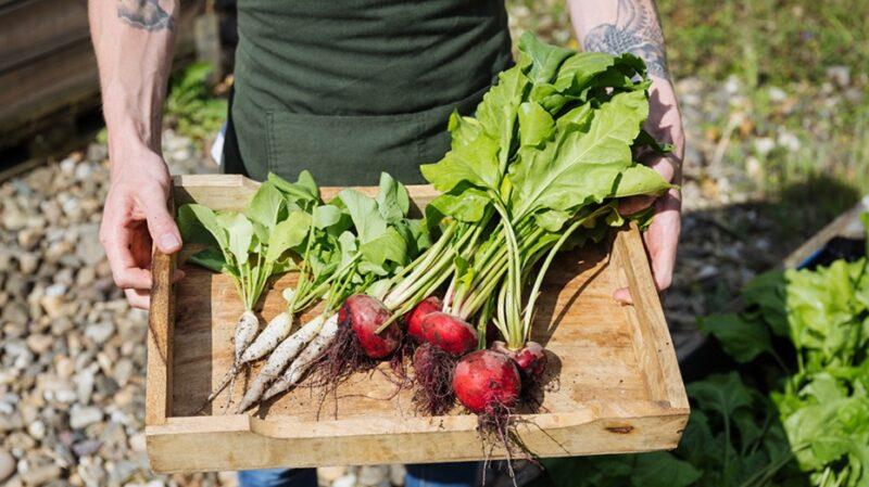 Buitenplaats Doornburgh - verse groenten uit de tuin